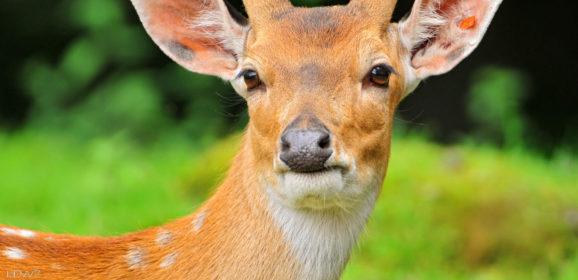Τα ζώα είναι πρεσβευτές του φυσικού κόσμου